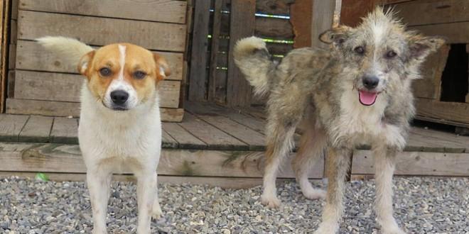 Apel al Fundaţiei Pro Animalia privind găsirea unor gazde temporare pentru puii de câine fără stăpâni